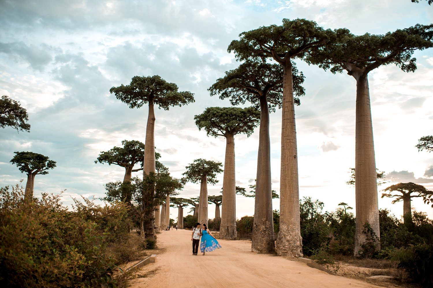 Madagascar Honeymoon Avenue of Baobabs-1